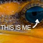 Nikon-D800-sample-image-crop