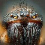 Spiky: Harold Taylor of Kensworth, Dunstable, entered this picture of a house spider's face