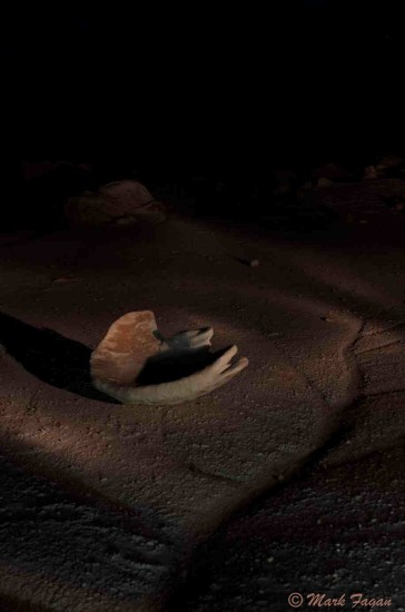 Bisti Badlands at Night