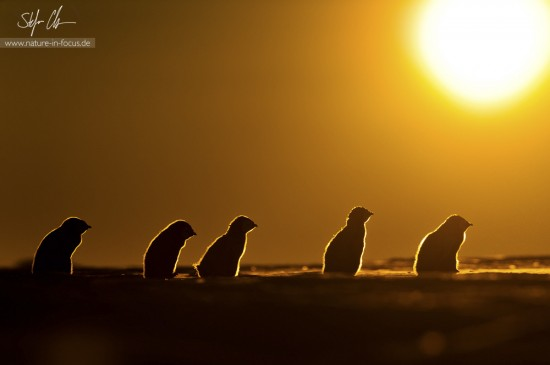 My year in Antarctica 14