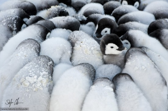 My year in Antarctica 15