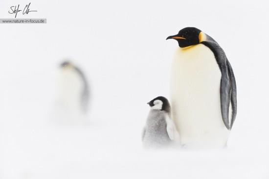 My year in Antarctica 16