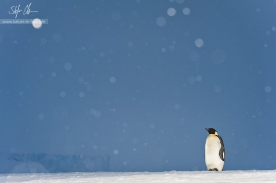 My year in Antarctica 19