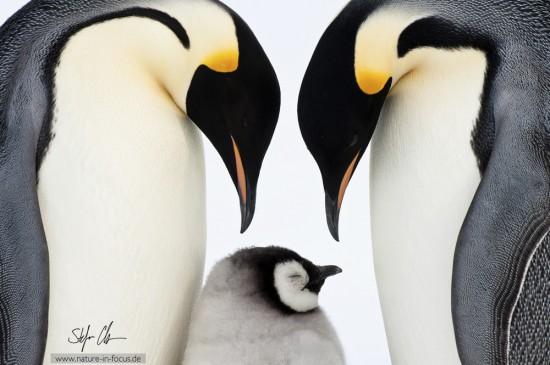 My year in Antarctica 20