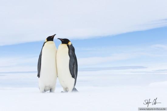 My year in Antarctica 22