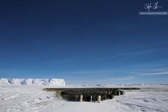 My year in Antarctica 4