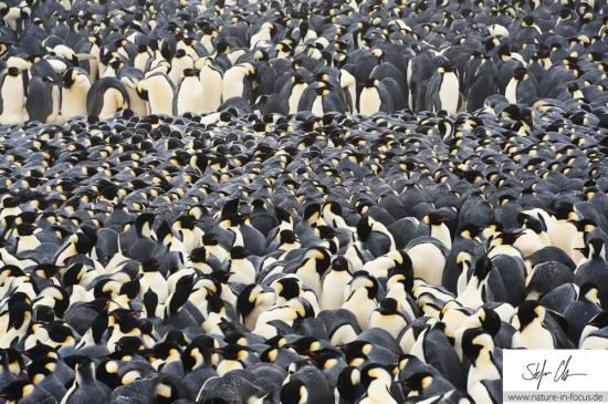 My year in Antarctica 5