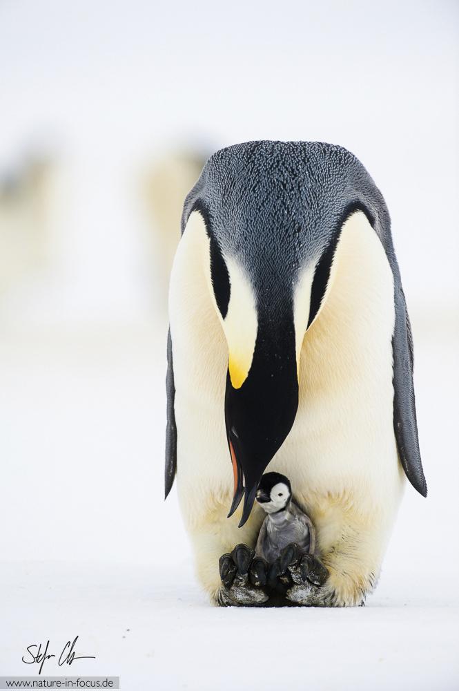 My year in Antarctica 6
