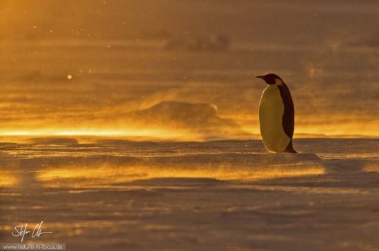 My year in Antarctica 7