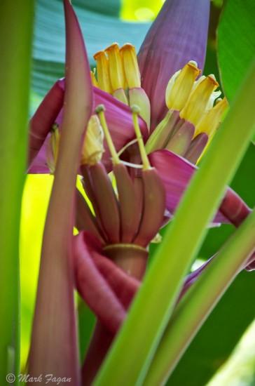 Tropical Flower Hagia Sofia