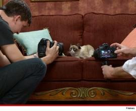 Grumpy Cat -shot with Nikon