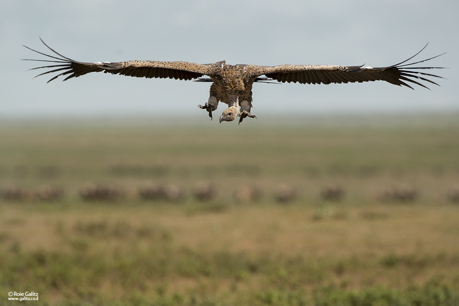 Nikon D800 goes wild in Africa 2