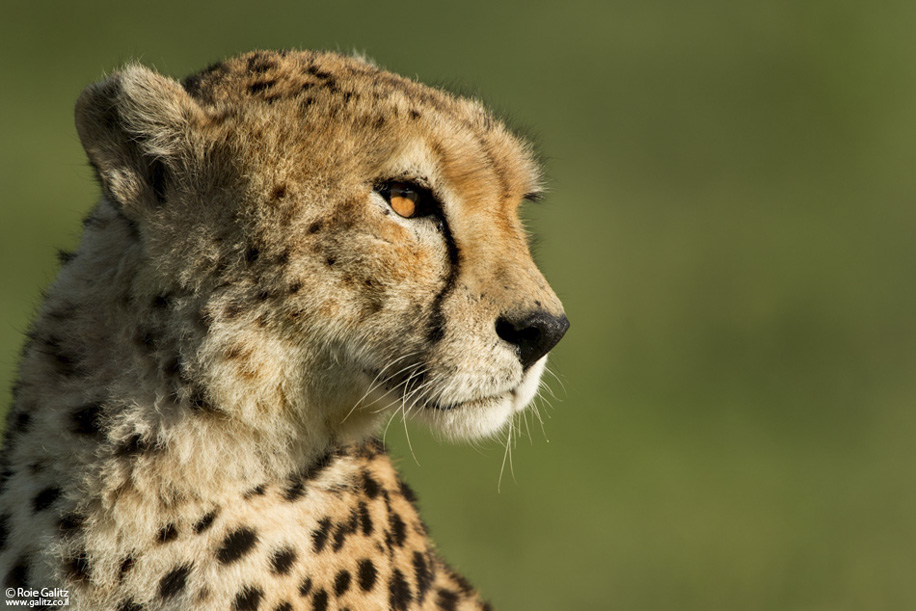 Nikon D800 goes wild in Africa 4