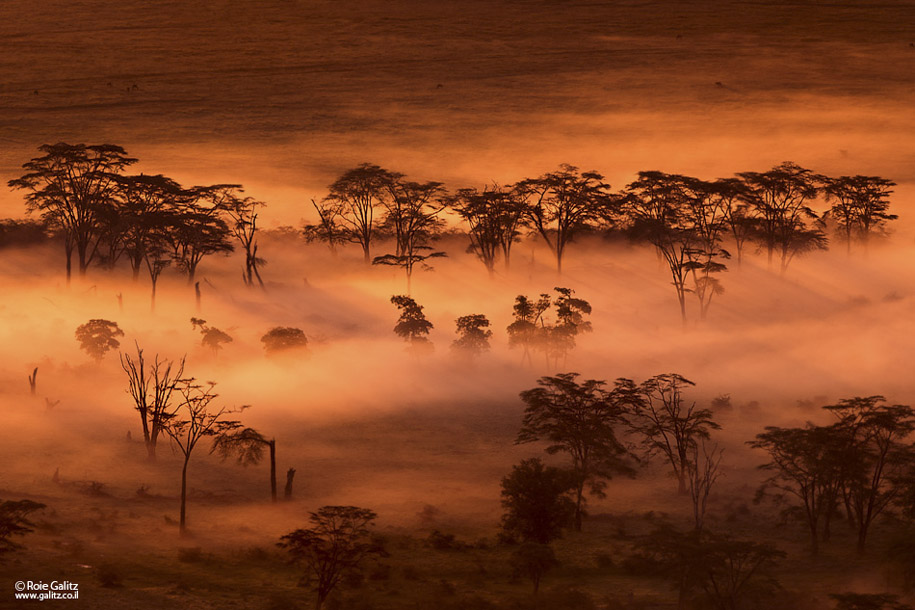 Nikon D800 goes wild in Africa 5