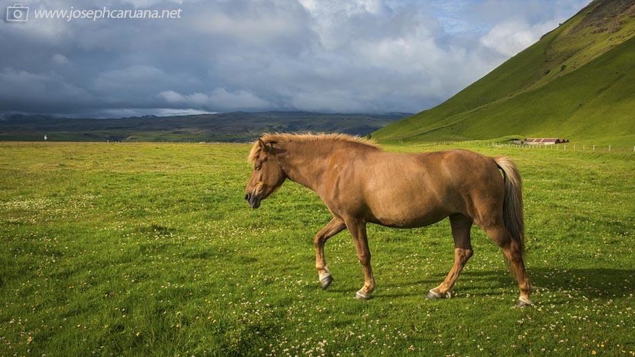 Nikon D800E does Iceland 10