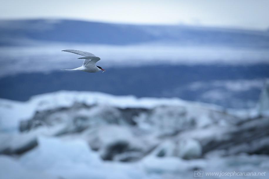 Nikon D800E does Iceland 18