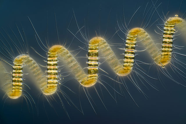 2013 Nikon Small World Photomicrography Competition winners 1