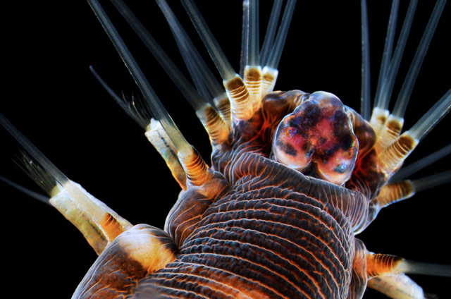2013 Nikon Small World Photomicrography Competition winners 3
