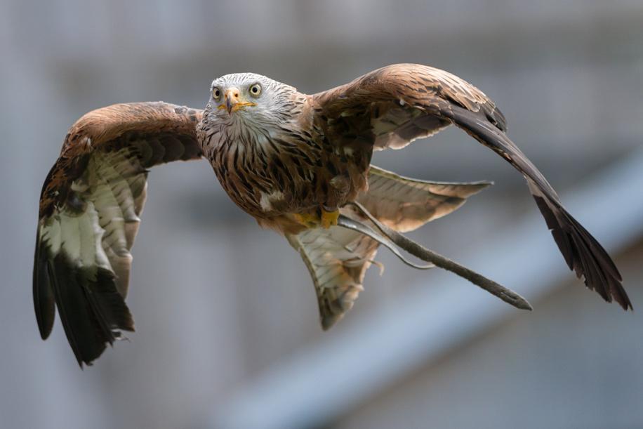 Birds in flight with the Nikon D800 4