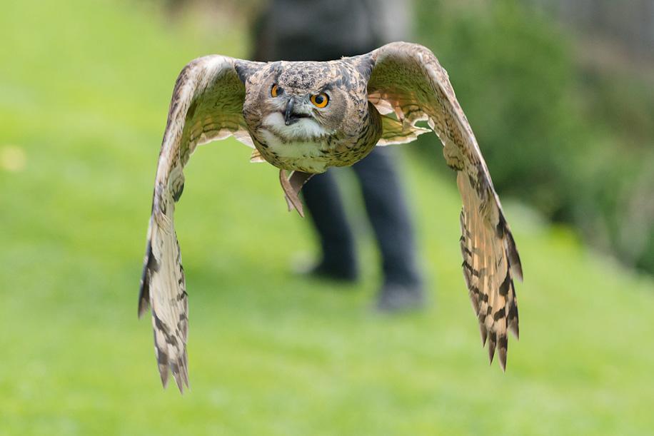 Birds in flight with the Nikon D800 5