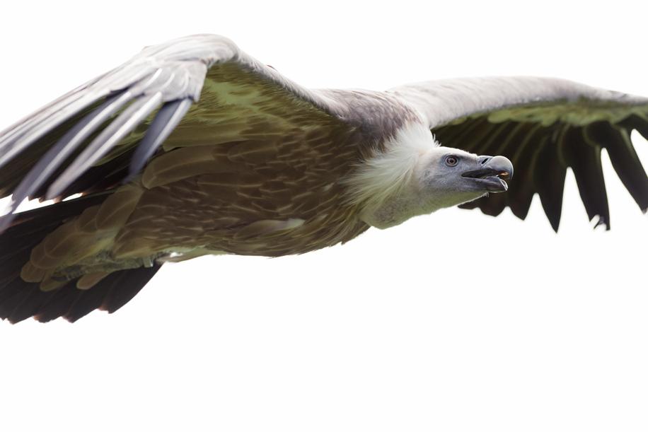 Birds in flight with the Nikon D800 7