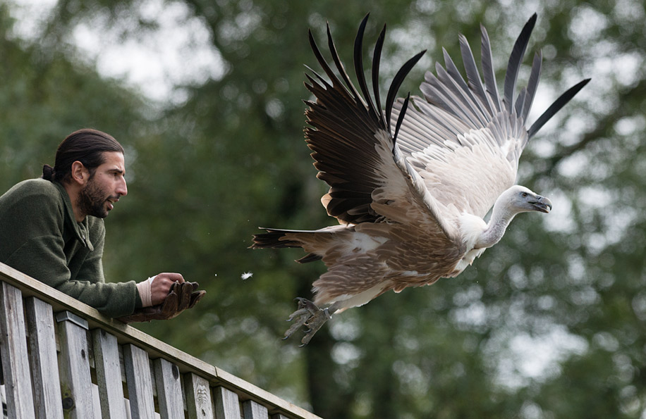 Birds in flight with the Nikon D800