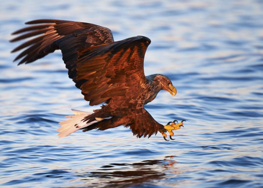 Eagle2ianrobins