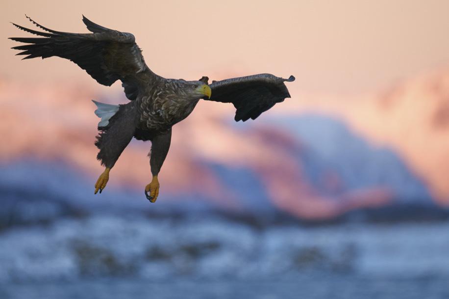 eagle3ianrobins