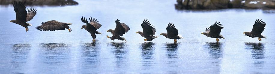 eagle4ianrobins