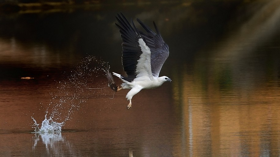 Best nikon camera body for bird photography homeminimalis com