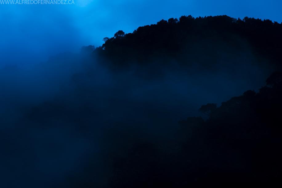 Cloudforest-Pasco-Peru