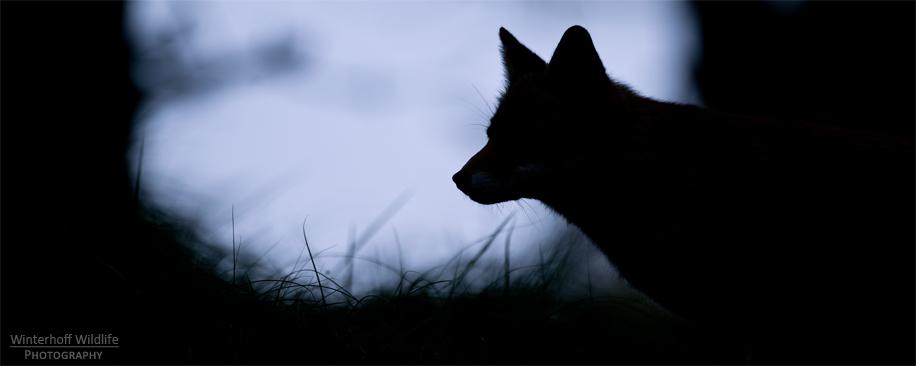 KW_Fox_010