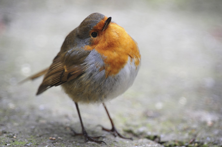 Round Robin! - Funtastic Animal Range
