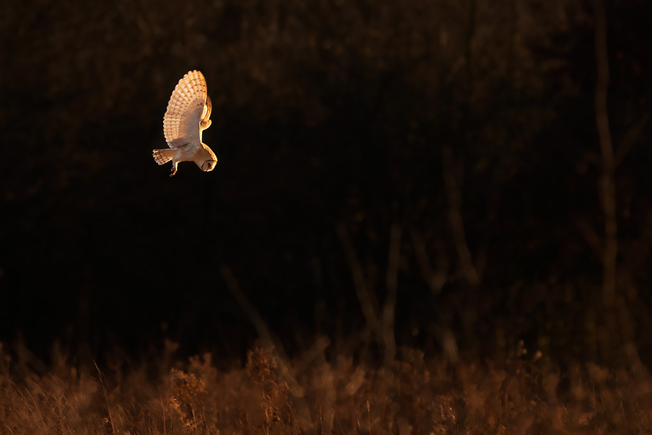 Nikon D700 & Wildlife photography: from Coolpix 4200 to Nikon D3s and every ...