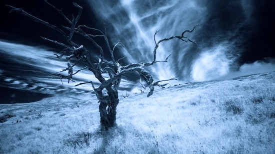 Hawaiian-infrared-time-lapse-of-haunting-Mamane-trees-made-with-IR-converted-Nikon-D5200-3