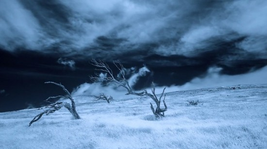 Hawaiian-infrared-time-lapse-of-haunting-Mamane-trees-made-with-IR-converted-Nikon-D5200