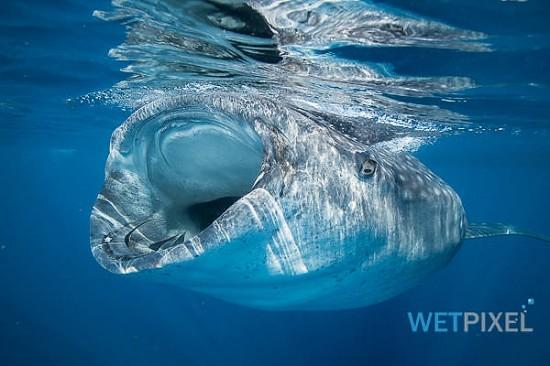 Nikon D810 underwater review_01