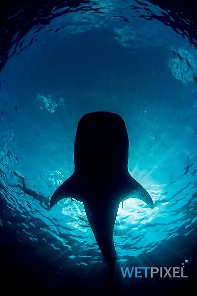 Nikon D810 underwater review_02