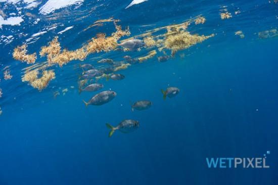Nikon D810 underwater review_04