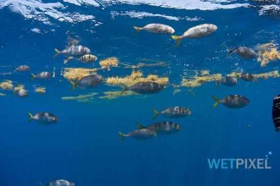 Nikon D810 underwater review_05