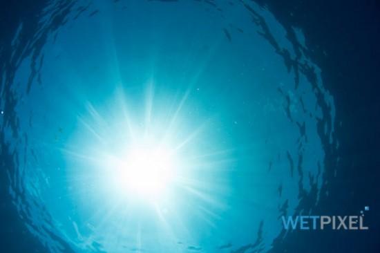 Nikon D810 underwater review_15