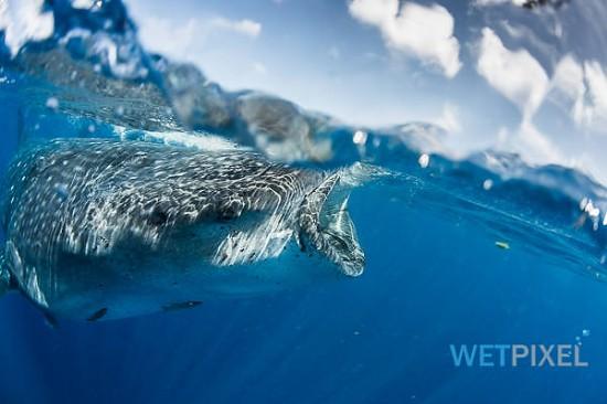 Nikon D810 underwater review_16