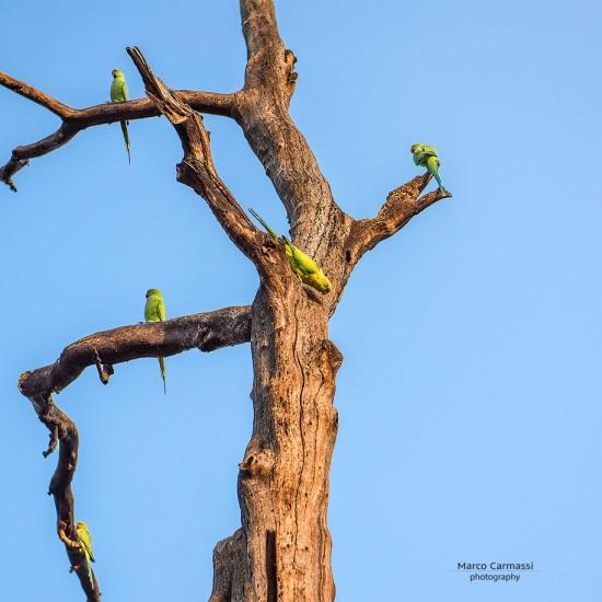 Rajasthan_008
