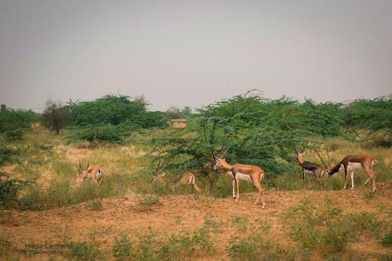 Rajasthan_009