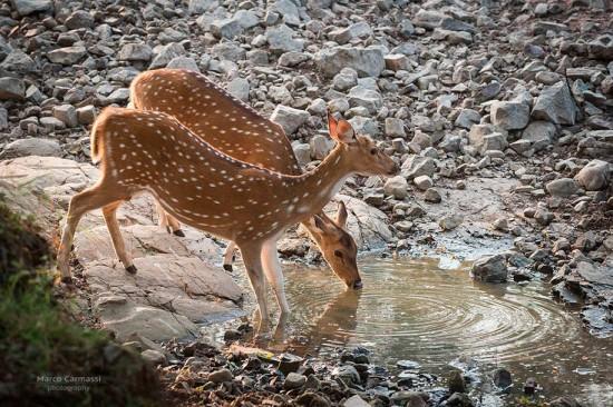 Rajasthan_010
