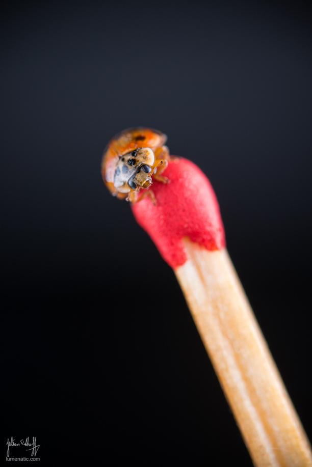 20150204-Venus-60-mm-Ladybug