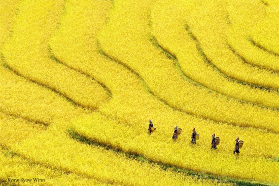 Kyaw-Kyaw-Winn_Rice-terrace-Myanmar-Golden-Triangle