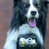 Nikon-Heartography-pho-dog-grapher-with-heart-rate-triggered-camera-2