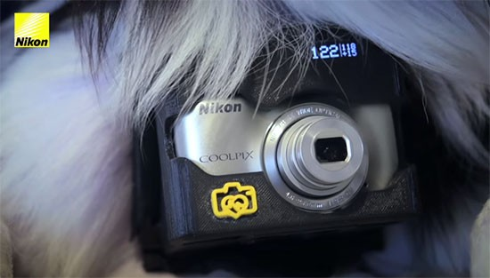 Nikon-Heartography-pho-dog-grapher-with-heart-rate-triggered-camera