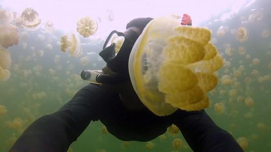 VideoStill-JellyfishLake-Palau